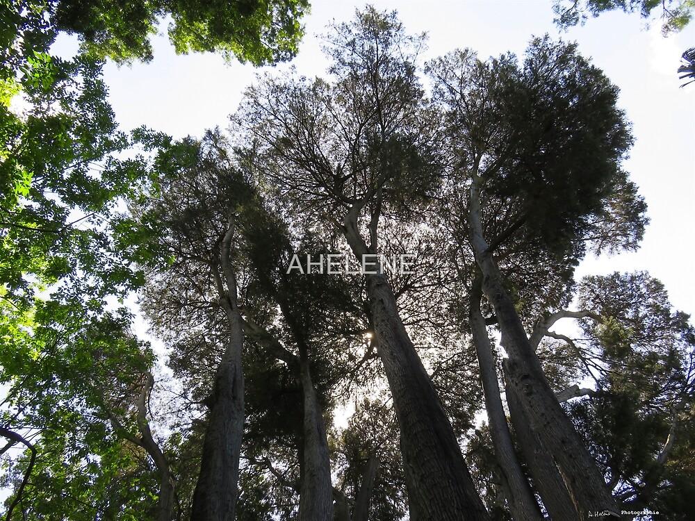 Australian trees by AHELENE