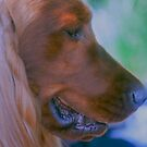 Portrait of a Show Dog. by Nancy Stafford