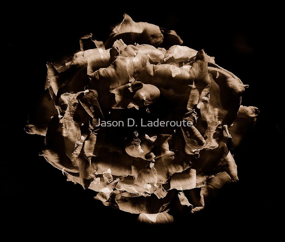 Wilst Folding by Jason D. Laderoute