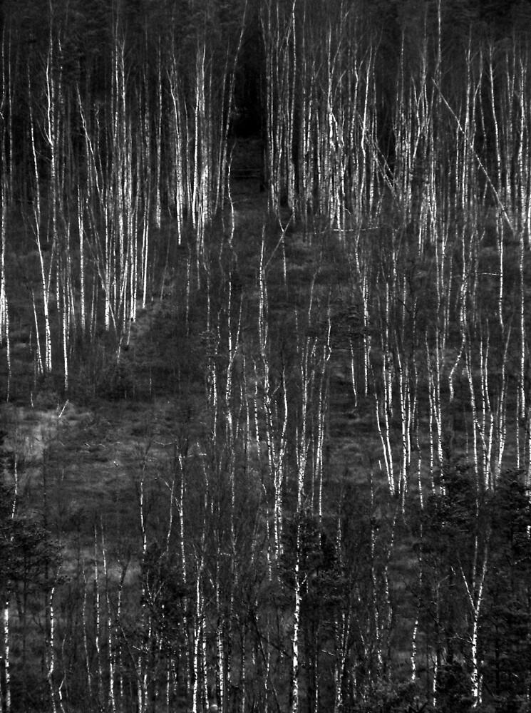 Northern mind by Petri Volanen