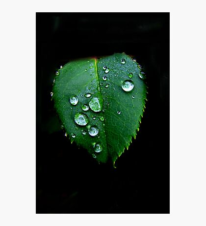 RainDrops  Photographic Print