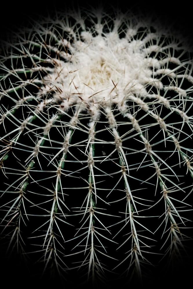 Shinjuku Gyoen: Carinate Cacti I by Chancelrie
