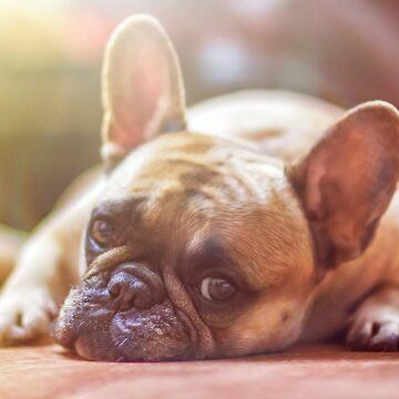 french bulldog laying by marasdaughter