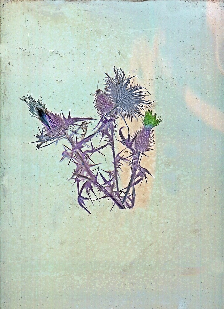 Thistles with flower by forecastfour