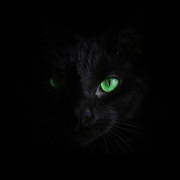 Black Cat by madnessdiscord