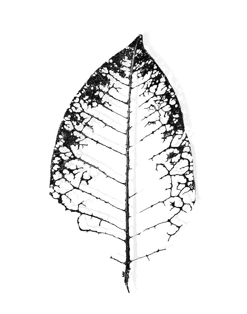 Black Leaf by jmwissler