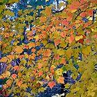 Poplar leaves by Marriet