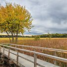 Autumn Marsh Grass by Owed To Nature