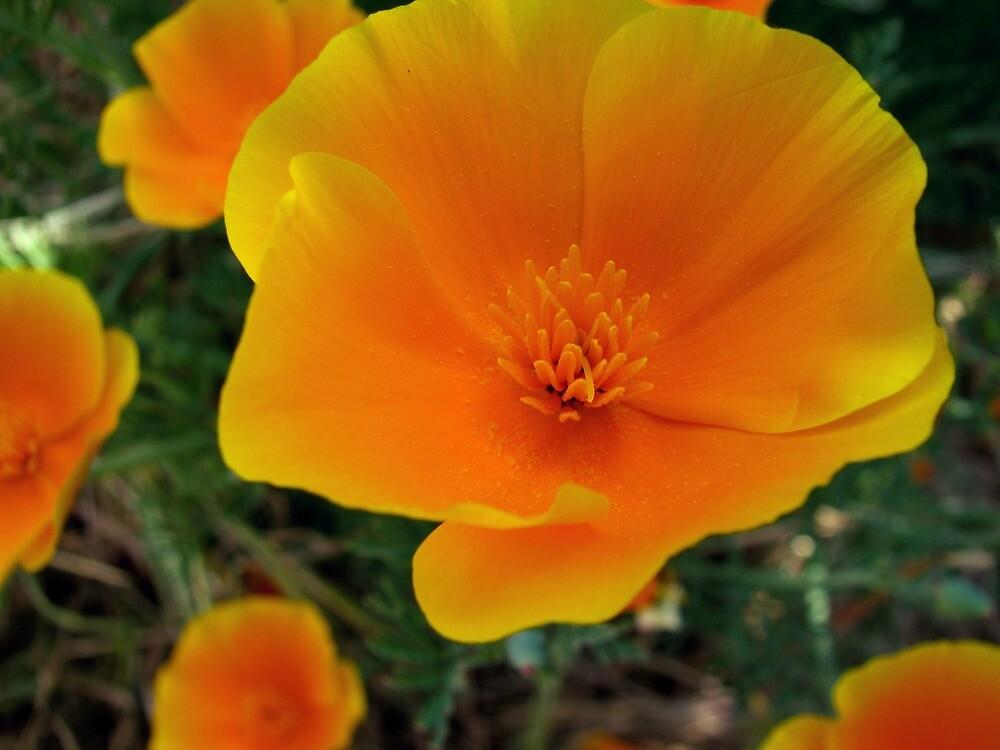 Delicate Petals by Aryka Brimmer