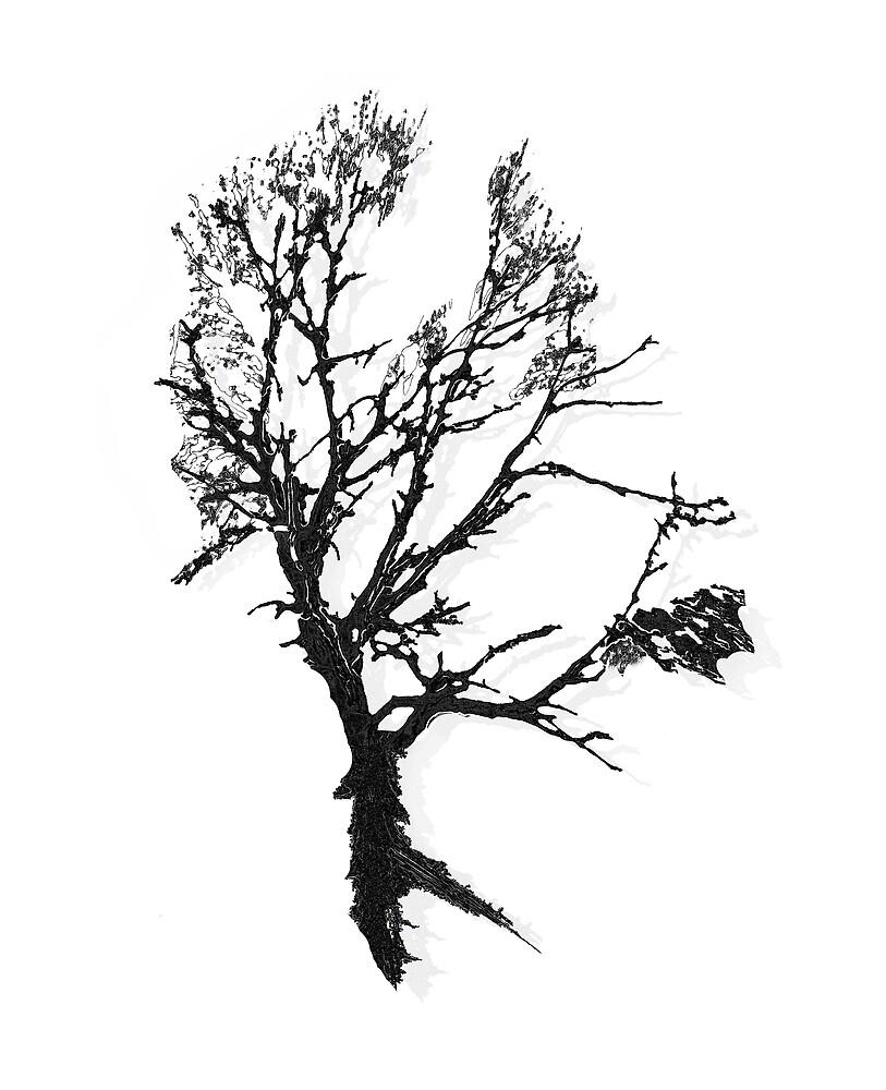 Black Tree by jmwissler
