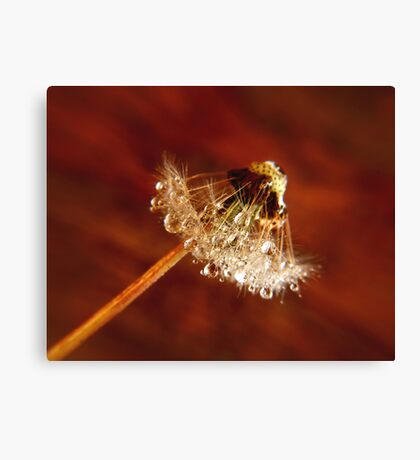 Dandelion diamonds Canvas Print