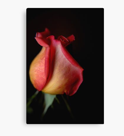 Shadow of a Rose Canvas Print