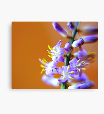 Tiny Beauty Canvas Print