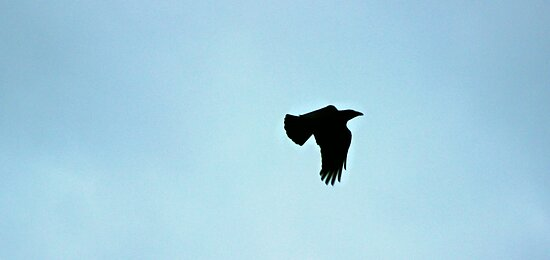 The Black Crow by ejrphotography