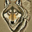 Gray Wolf Portrait by Rebecca Wang
