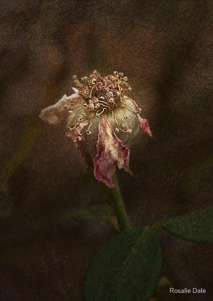 Rust 'n Roses #20 by Rosalie Dale