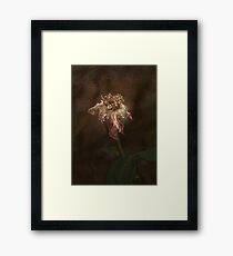 Rust 'n Roses #20 Framed Print