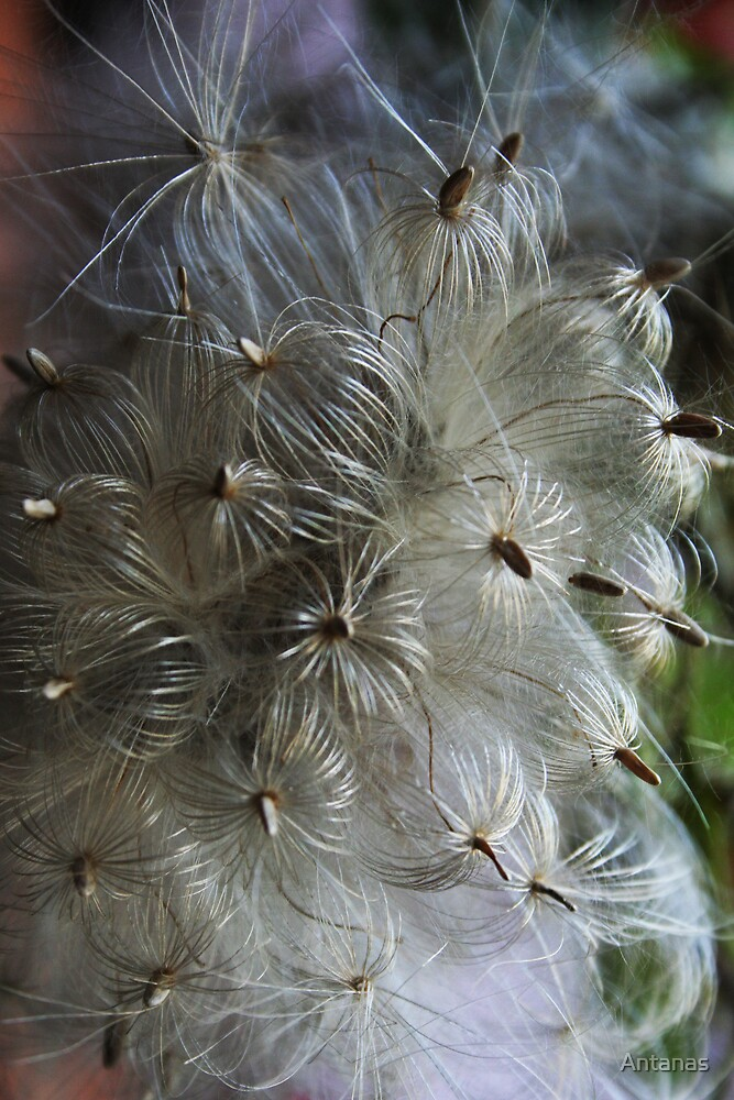 Fabulous flowers 2 by Antanas