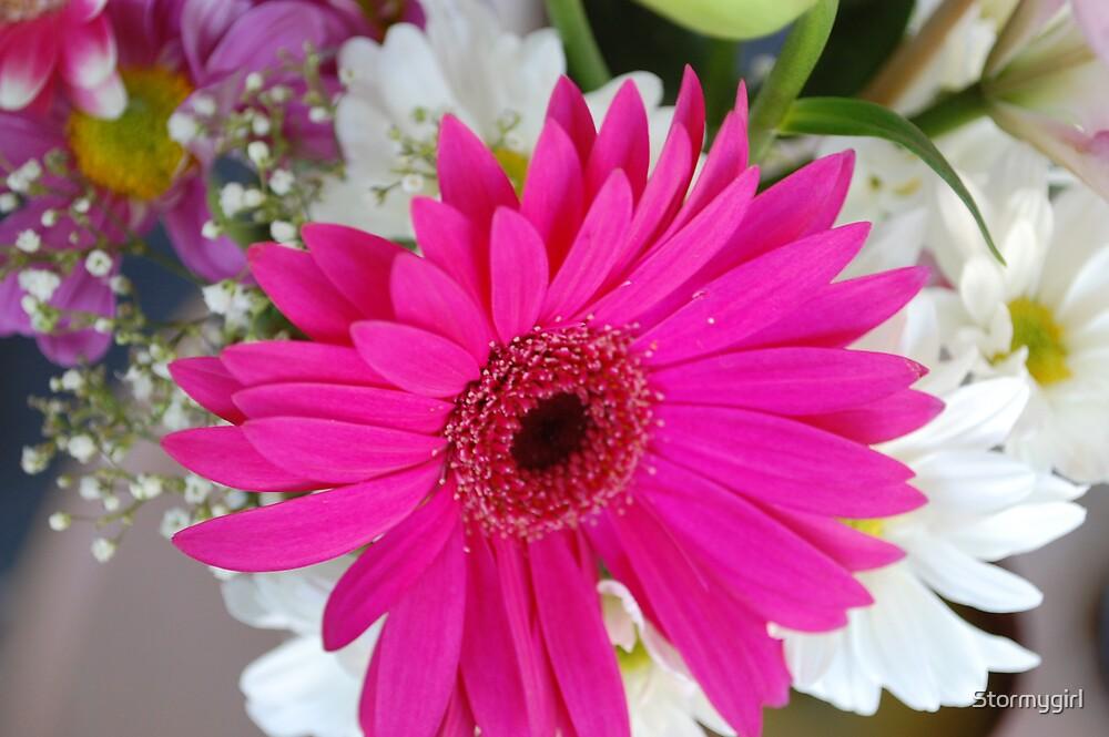 Gerber Flower by Stormygirl