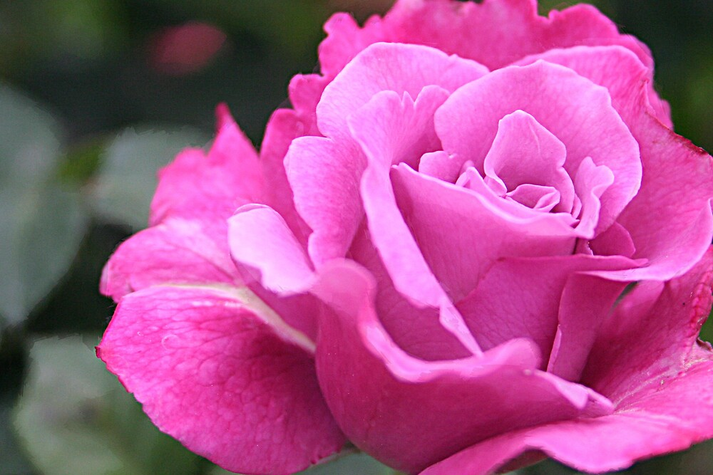 Pretty in Pink by Liz Wear