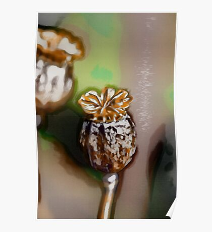 Seed Pods Poster