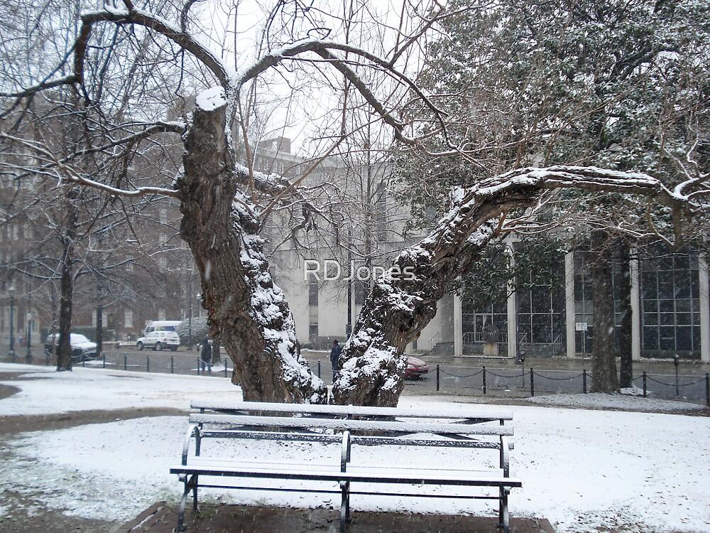 A Snowy Bench by RDJones