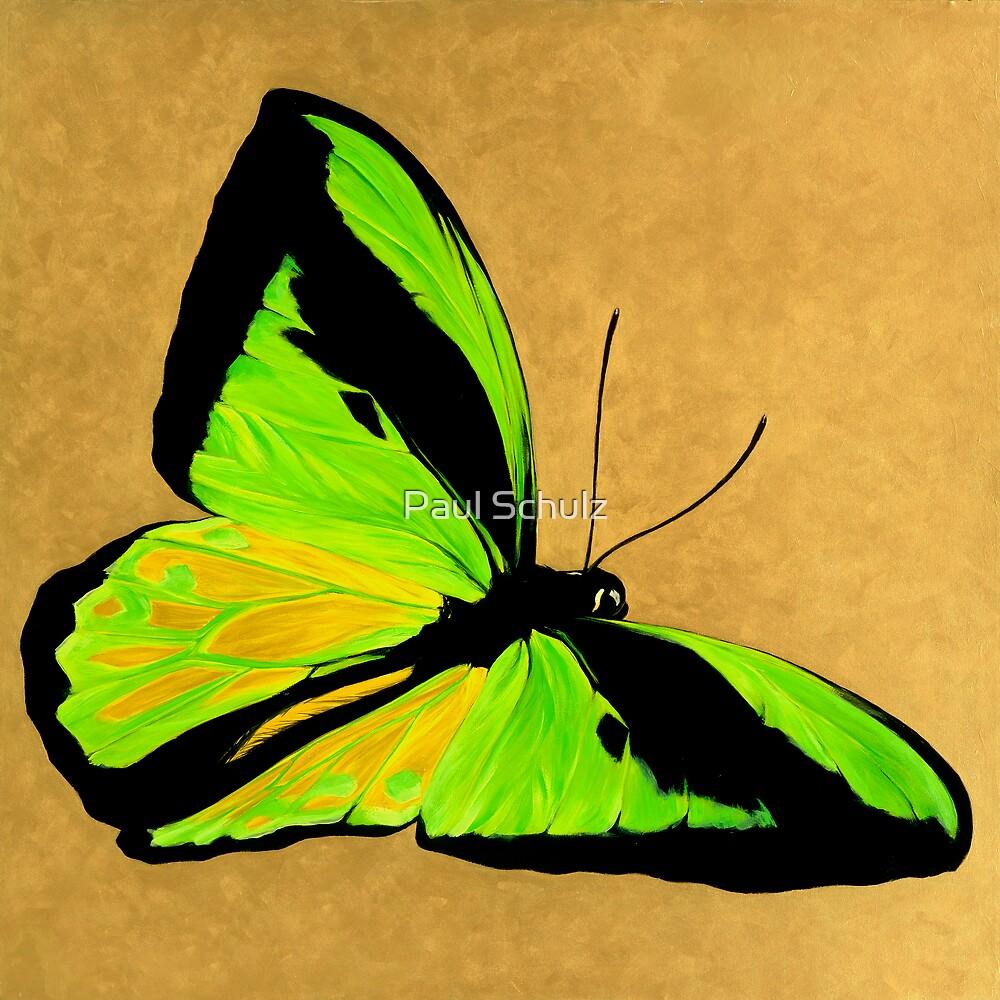 Birdwingbutterfly.jpg by Paul Schulz