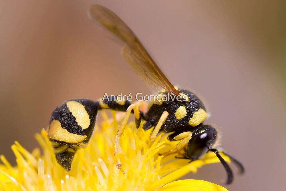 Wasp - Eumenes pomiformis by André Gonçalves