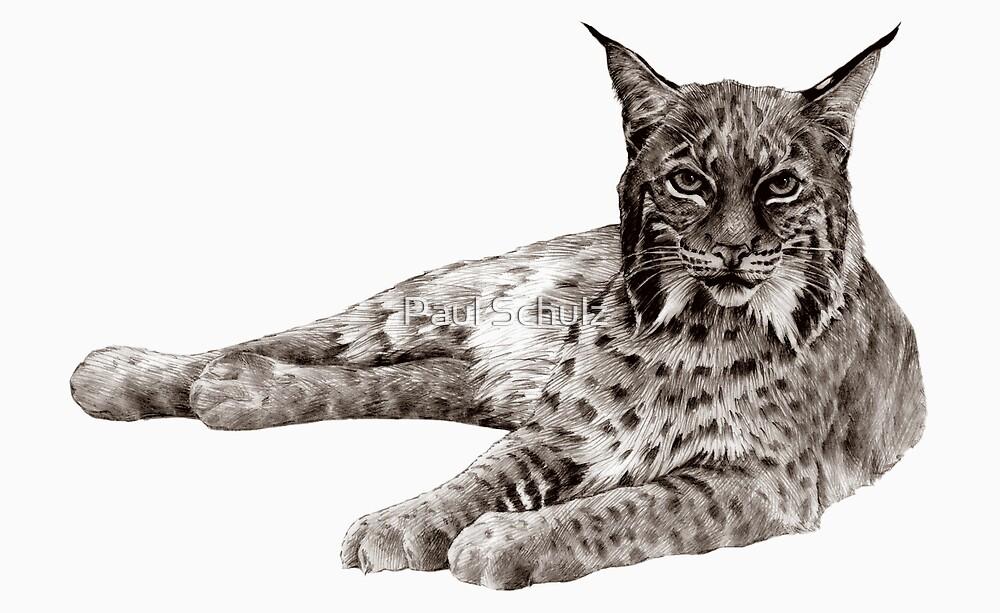 Bobcat by Paul Schulz