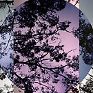 Moonlighting by Kitsmumma