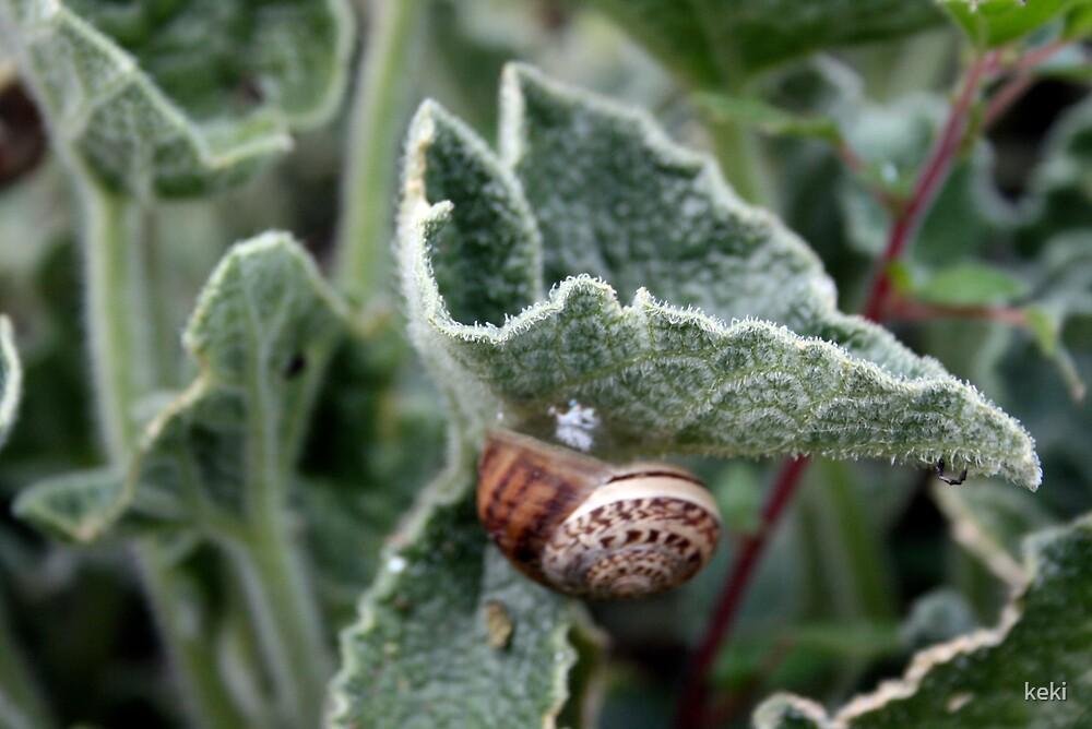 snail by keki