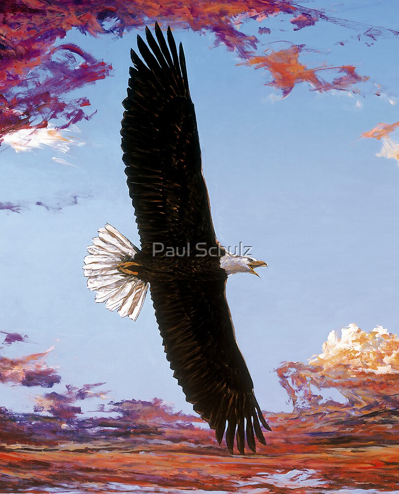 Eagle by Paul Schulz