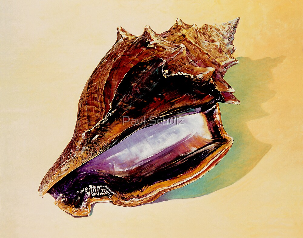 Fighting Conch Shell by Paul Schulz