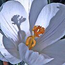 Spring is in the air by LudaNayvelt
