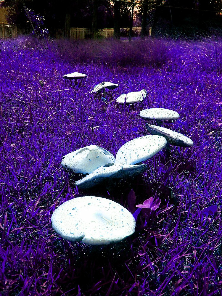 magical shrooms by dannielle