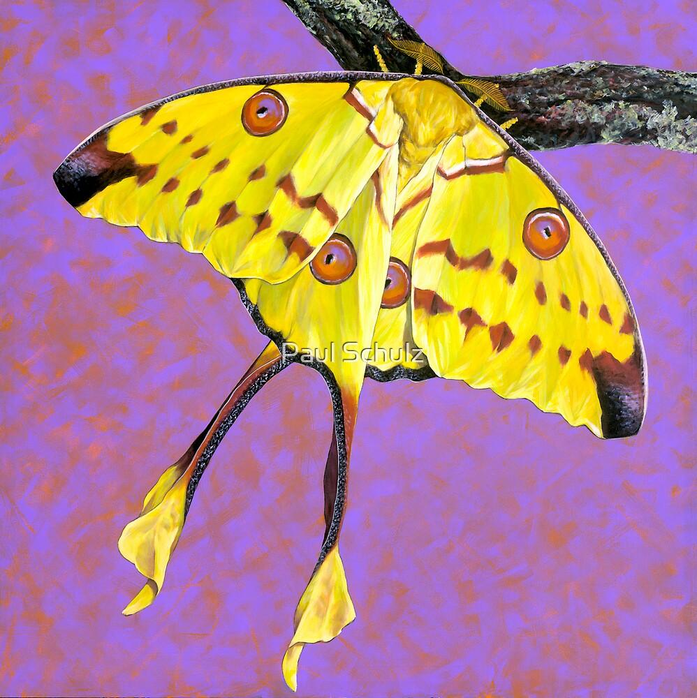 Yellow Comet Moth by Paul Schulz