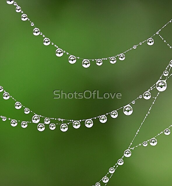 Spotted Circles by ShotsOfLove