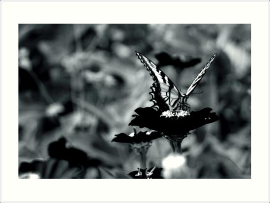 In Butterfly by Jill Sprague