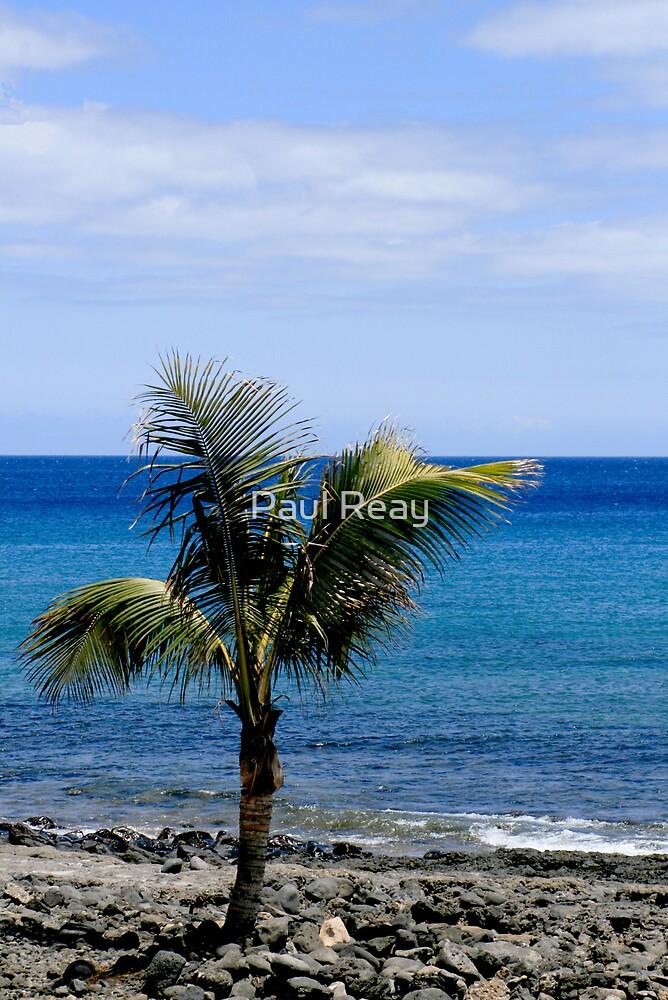 Palm tree on beach by Paul Reay