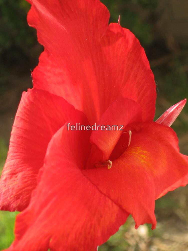 Cannis by felinedreamz