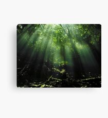 Cave Diving in Mexico Canvas Print