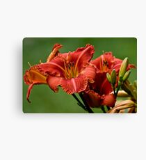 """Raging Wildfire"" Daylily Canvas Print"