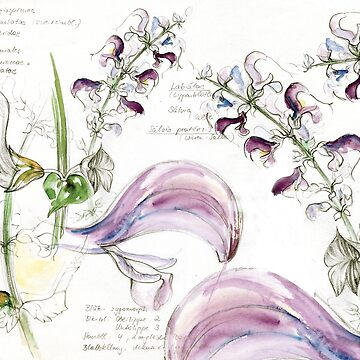 Sage flower watercolor sketch study sheet naturalistic by Mauswohn