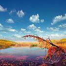 Pond Of Calmness by Igor Zenin
