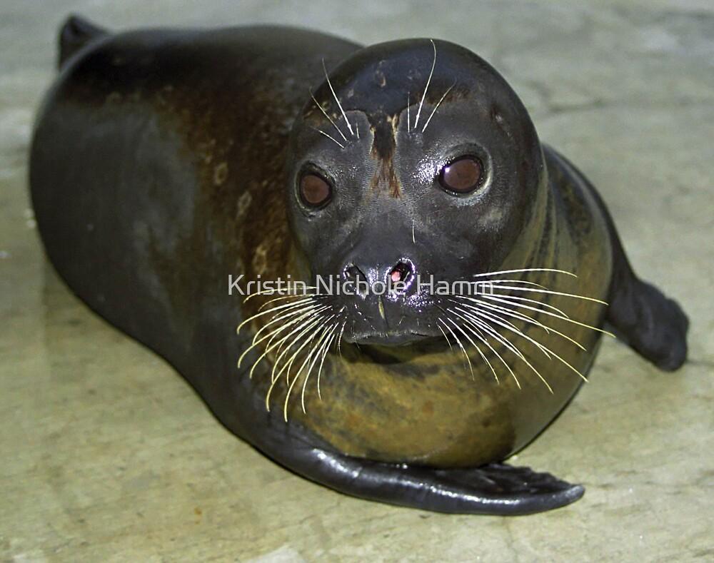 Harbor Seal by Kristin Hamm