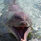 Dolphin by Kristin Hamm