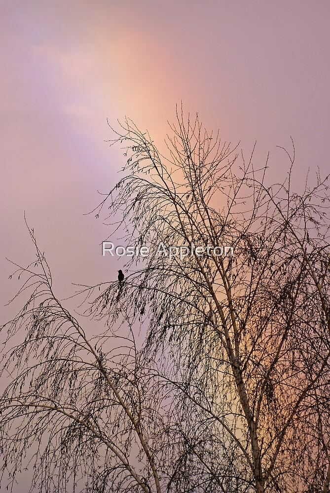 Blackbird rainbow by Rosie Appleton