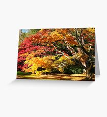 Autumn Acer Glade Greeting Card
