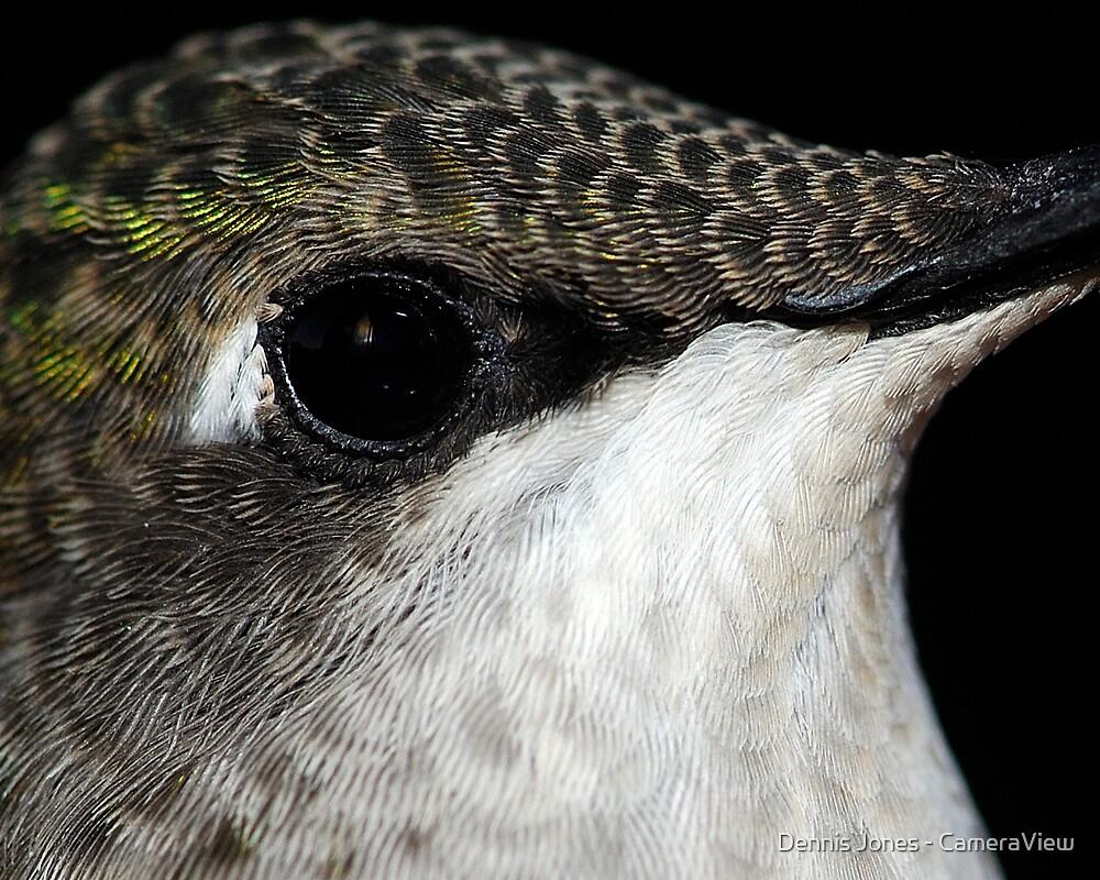 Eye Exam #2 by Dennis Jones - CameraView