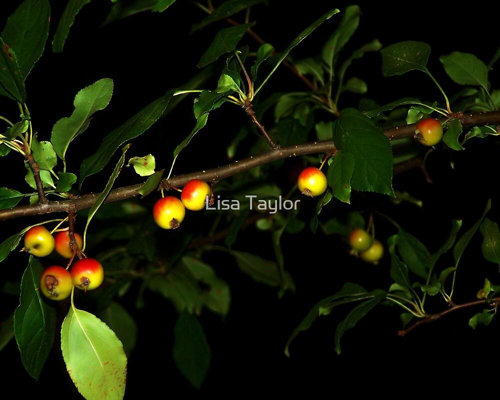 Crabapples at Night by Lisa Taylor
